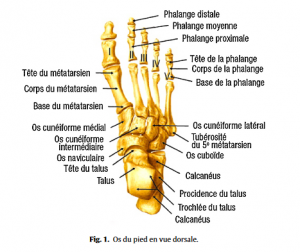 Fig 1 Proformed - formations medicales