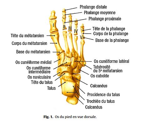 douleur pied droit exterieur