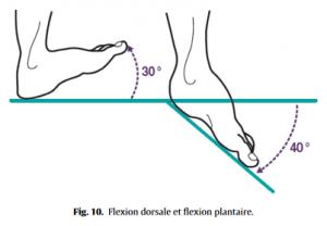 Fig 10 Proformed - formations medicales