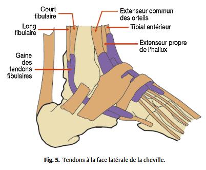 douleur interieur du pied