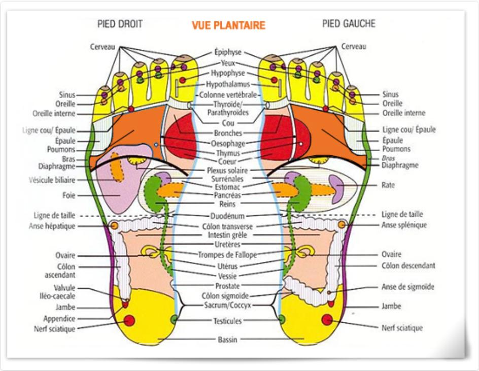 zone pied réflexologie